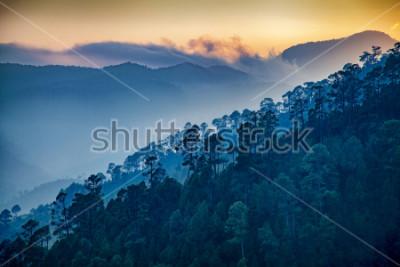 Canvastavlor Beautiful view of Foggy pine forest and sunrise at himalaya range, Almora, Ranikhet, Uttarakhand, India.