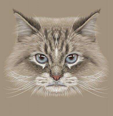 Canvastavlor Belysande Porträtt av sibirisk katt. Söt inhemska färgpunkt Katt med blå ögon.