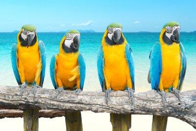 Canvastavlor Blått och guld- Ara på tropiska vackra stranden och havet