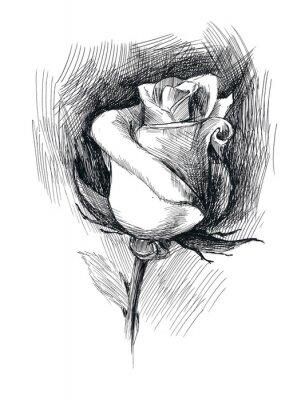 Canvastavlor blomma skiss