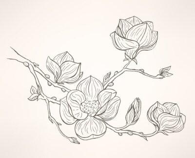 Canvastavlor blommande magnolia