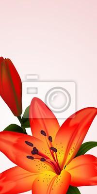 Canvastavlor Blommor kort eller banner med bicolored lilja