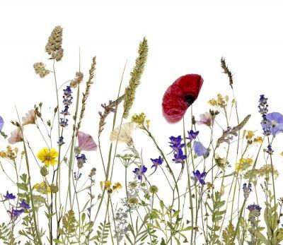 Canvastavlor blommor och örter