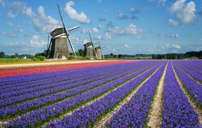Canvastavlor Blommor och väderkvarnar i Holland