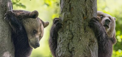 Canvastavlor brunbjörn på en träd