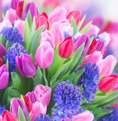 Canvastavlor bukett av blått hyacint och tulpaner