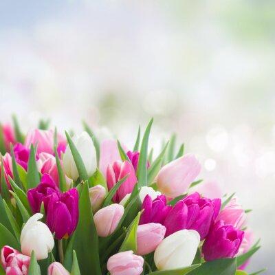 Canvastavlor bukett rosa, lila och vita tulpaner