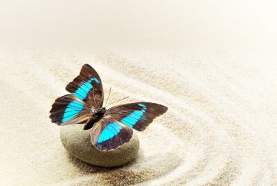 Canvastavlor Butterfly Prepona Laerte på sanden