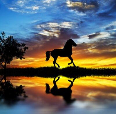 Canvastavlor caballo salvaje en el lago