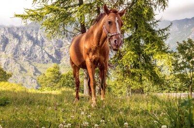 Canvastavlor cavallo Pascolo