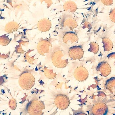 Canvastavlor chamomiles blommor - tappning utformar