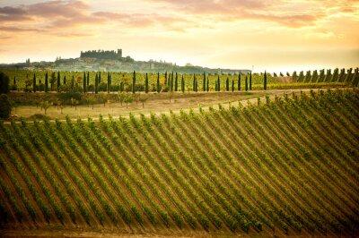 Canvastavlor Chianti kullar med vinodlingar och cypresser. Toskanska landskap mellan Siena och Florens. Italien
