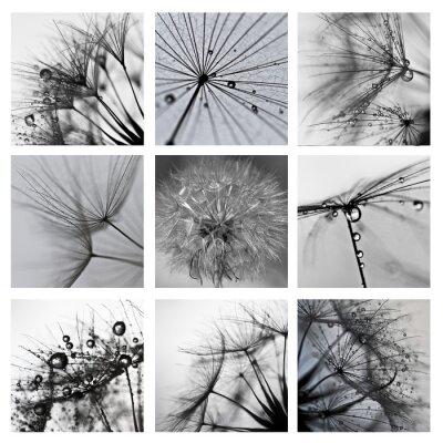Canvastavlor Collage ze zdjęć makro Wielkiego dmuchawca