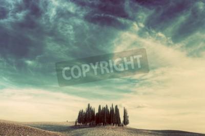 Canvastavlor Cypress träd på fältet i Toscana, Italien vid solnedgången. Toskanska landskapet i vintage, retro humör