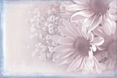 Canvastavlor daisy bukett med pastellrosa textur overlay och blå ram