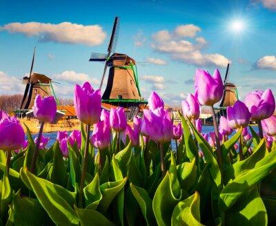 Canvastavlor Den berömda holländska väderkvarnar