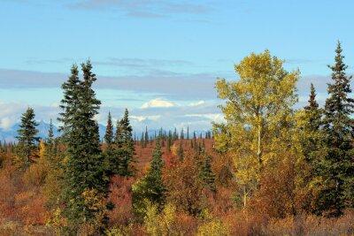 Canvastavlor Denali National Park i höst