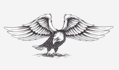 Canvastavlor Detaljerad Hand Drawn Eagle. Vektor.