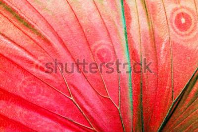 Canvastavlor Detaljerat makrofoto av en röd tropisk fjärilsvinge