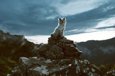 Canvastavlor Dog sitter på en klippa i bergen