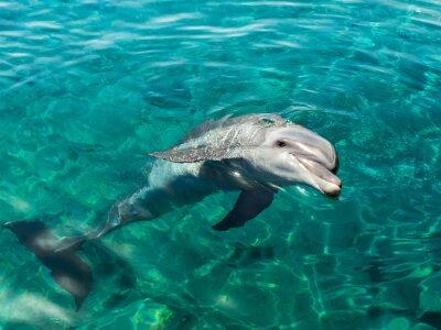 Canvastavlor Dolphin ler liknande Mona Lisa