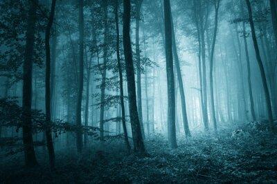 Canvastavlor Drömmande mystiska blå färg dimmig skog