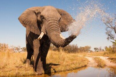 Canvastavlor Elefant