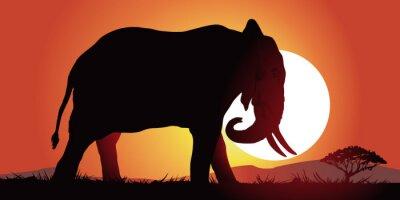 Canvastavlor Elefant-couche de soleil