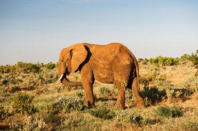 Canvastavlor Elefant i Tsavo East National Park, Kenya