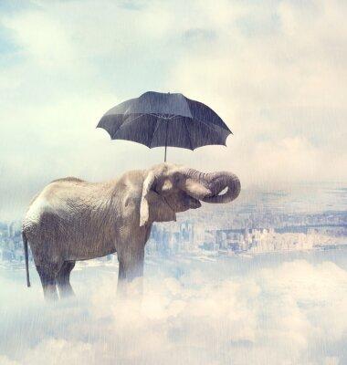 Canvastavlor Elefant njuter regn avobe staden på molnen