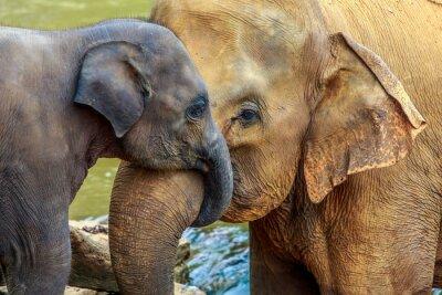 Canvastavlor elefant och bebiselefant