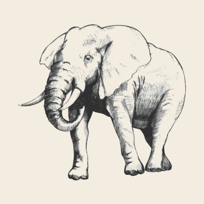 Canvastavlor elefant skissar