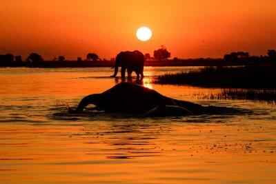 Canvastavlor elefant solnedgång