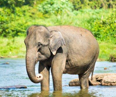 Canvastavlor Elephatnt
