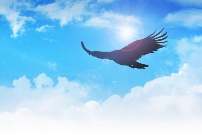 Canvastavlor En flygande örn i luften