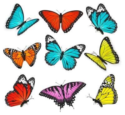 Canvastavlor en uppsättning realistiska färgglada fjärilar illustration