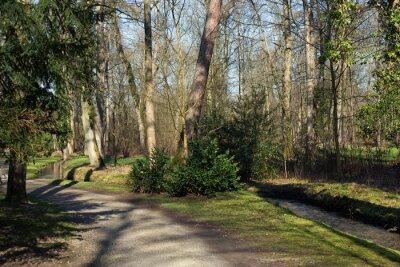Canvastavlor En väg och en liten bäck i skogen