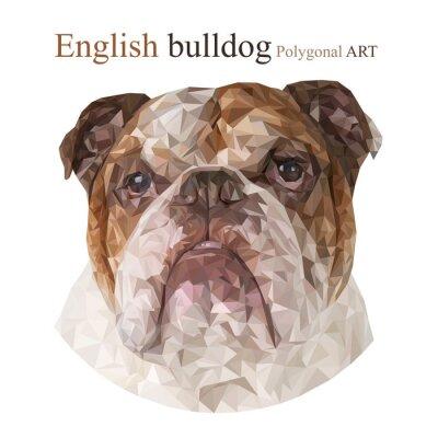 Canvastavlor Engelsk bulldog. Polygonal ritning ..