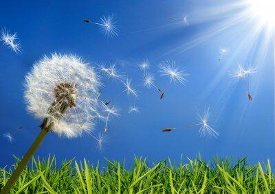 Canvastavlor exklusiv - allergi koncept på våren