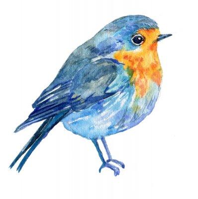 Canvastavlor fågel på en .illustration vattenfärg vit bakgrund