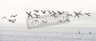 Canvastavlor Fåglar som flyger över ett snöigt fält i vinter