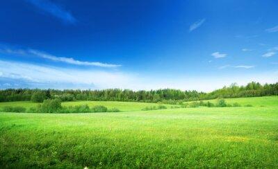 Canvastavlor fält av gräs och perfekt himmel