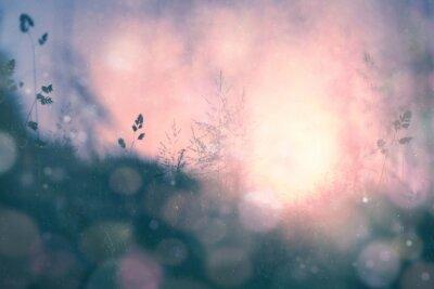 Canvastavlor Fantasi solnedgång bokeh suddig äng bakgrund