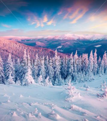 Canvastavlor Fantastisk vinter soluppgång i Karpaterna med snödräda träd. Färgglatt utomhus scen, gud nyttår festkoncept. Konstnärlig stil efter bearbetad bild.