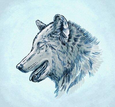 Canvastavlor färg gravera bläck dra wolf illustration