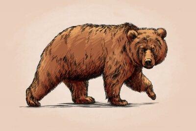 Canvastavlor färg gravera isolerad grizzlybjörn
