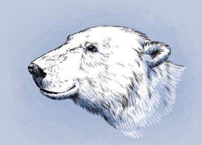 Canvastavlor färg gravera isolerade vektor björn