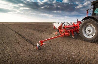 Canvastavlor Farmer med traktorn sådd - sådd grödor vid jordbruksområdet under våren