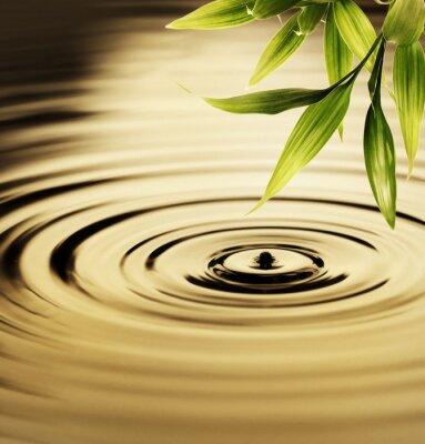 Canvastavlor Färsk bambu blad över vatten