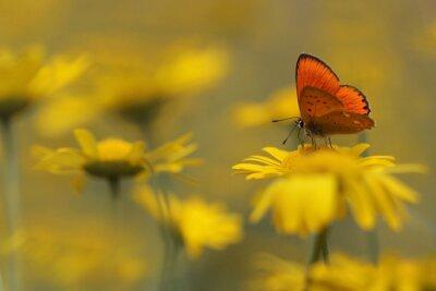 Canvastavlor fjäril i trädgården